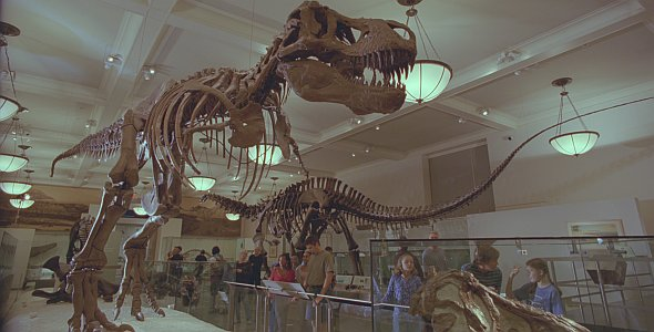 Dinosaurier Live 3D