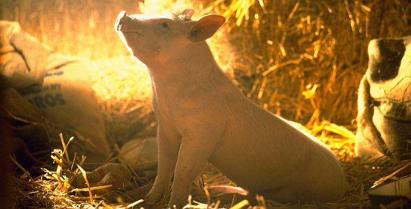 Ein Schweinchen namens Babe (Jahr100Film)