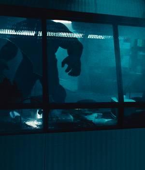 Szene aus Ang Lee`s Hulk