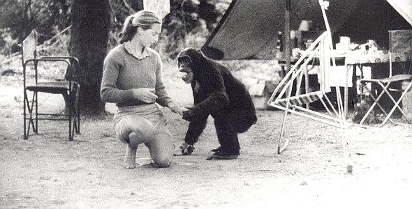 """Dr. Jane Goodall in """"Jane's Journey - Die Lebensreise der Jane Goodall"""""""