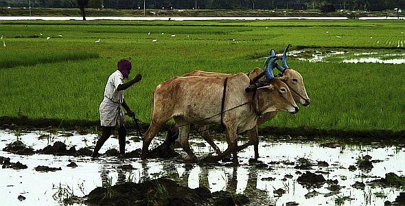 Good Food Bad Food - Anleitung für eine bessere Landwirtschaft