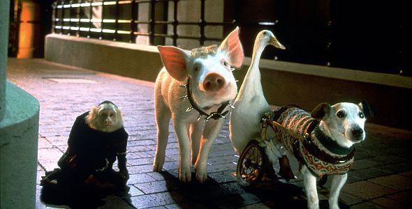 Schweinchen Babe in der großen Stadt
