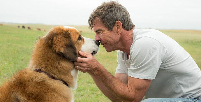 Bailey - Ein Freund fürs Leben (A Dog's Purpose, 2017)