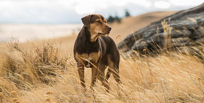 Die unglaublichen Abenteuer von Bella (A Dog's Way Home, 2019)