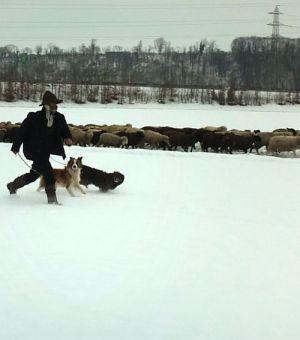 Winternomaden (Szene) 2012