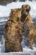 Bären (Szene) 2014