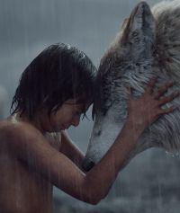 Neel Sethi ist Mowgli in