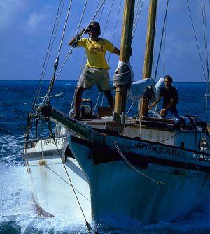 Der weiße Hai 4 - Die Abrechnung (Jaws: The Revenge, 1987)