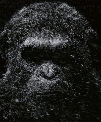 Planet der Affen: Survival 3D (War for the Planet of the Apes, 2017)